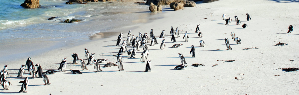 Penguin Colony on Adventure Travel in South Africa