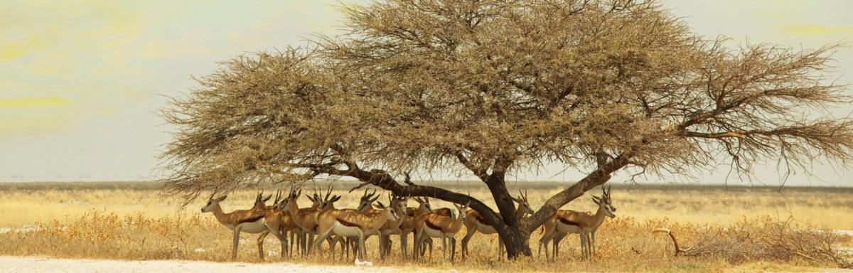 antelope on African adventure tour