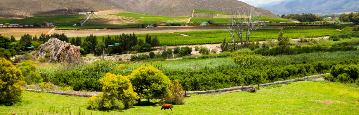 winelands scenery in Cape Town, South Africa
